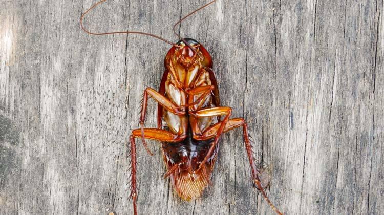The Best Roach Killer Get Rid Of