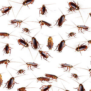 Baby roaches means there is a big infestation. In other words, you have a big problem.
