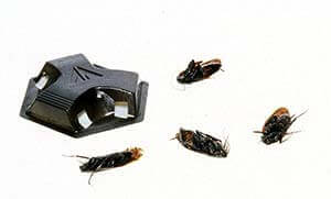 one type of roach baits