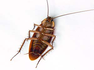how to get rid of cockroaches? Just follow the instructions here and you'll be able to eliminate them from your home in no time.