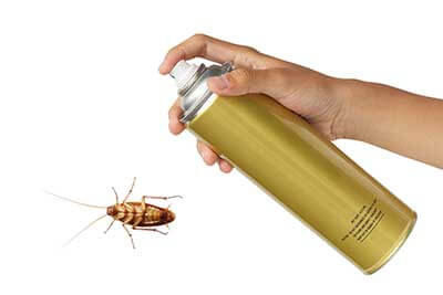 Using an aerosol spray to kill a cockroach.