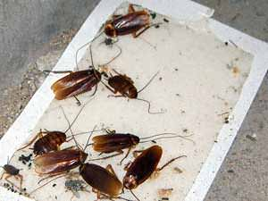 3 Roach Traps Worth Buying: Forget the Rest, These are the Best Because
