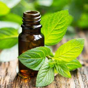 Peppermint Oil Mice Repellent: How to Get the Best Results