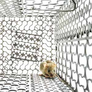 3 Humane Mouse Traps That Gets No Kill Results